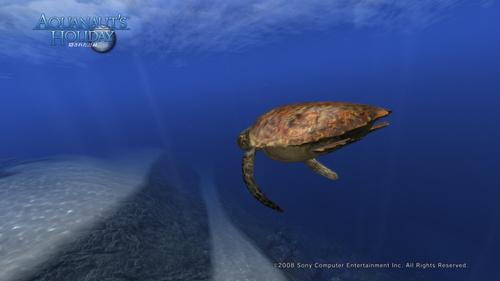 AquaPhoto しらべの海にて撮影_4.jpg