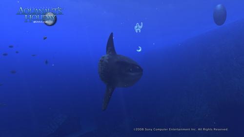 AquaPhoto 啓示の海にて撮影.jpg