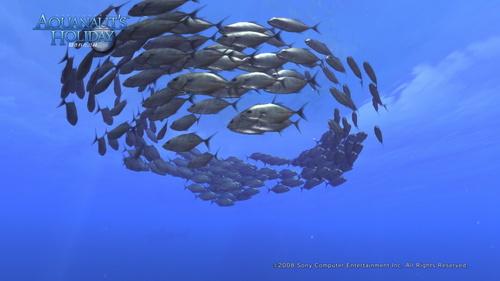 AquaPhoto 静かの海にて撮影.jpg